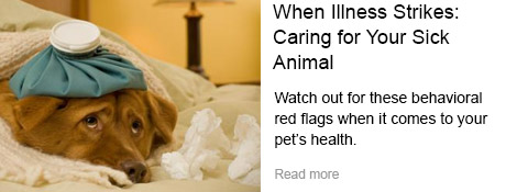 When Illness Strikes: Caring for Your Sick Animal